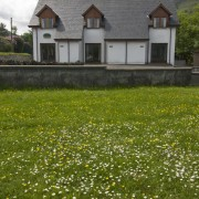 Summer daisies at Quarry Cottages
