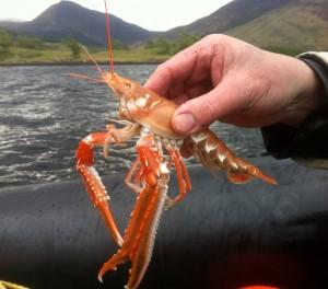 seaxplorer prawn